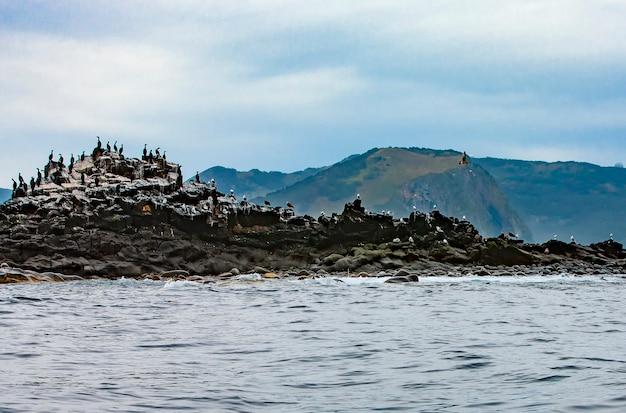 La colonia di cormorani