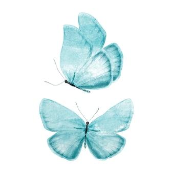 Farfalla di colore. isolato su sfondo bianco