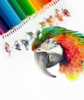 Disegno di una testa di pappagallo ara a colori. matite colorate acquerellabili, materiali artistici fotografici. schizzo in corso