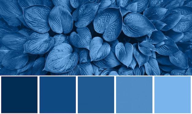 Tavolozza di colori con trame naturali, foglie ispirate al colore blu di tendenza dell'anno 2020. sfondo foglia tropicale. concetto di moda