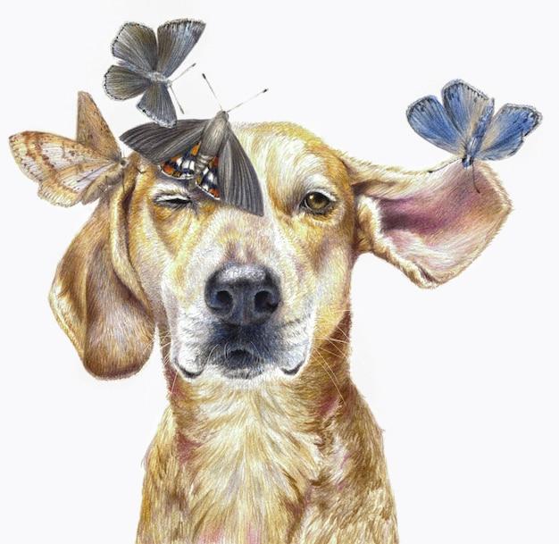 Ritratto a colori di un cane con farfalle isolato su uno sfondo bianco. realistico disegno a matita colorata.