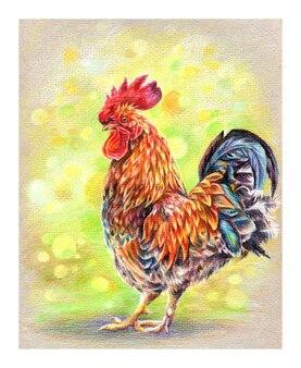 Schizzo di matite colorate di gallo luminoso o gallo