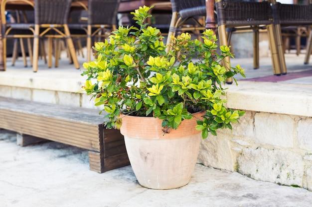 Piante in vaso colorate. diverse piante in vaso e piantine