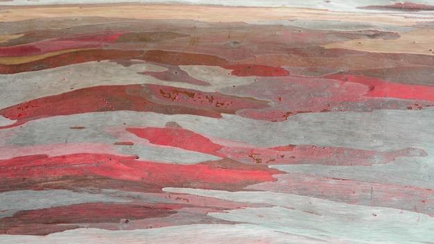 Estratto variopinto della corteccia di albero dell'eucalyptus