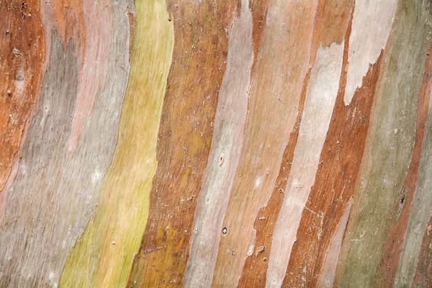 Struttura astratta variopinta del modello della corteccia di albero dell'eucalyptus