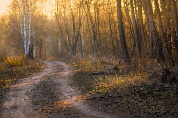 Sentiero colorato autunno nella foresta di autunno