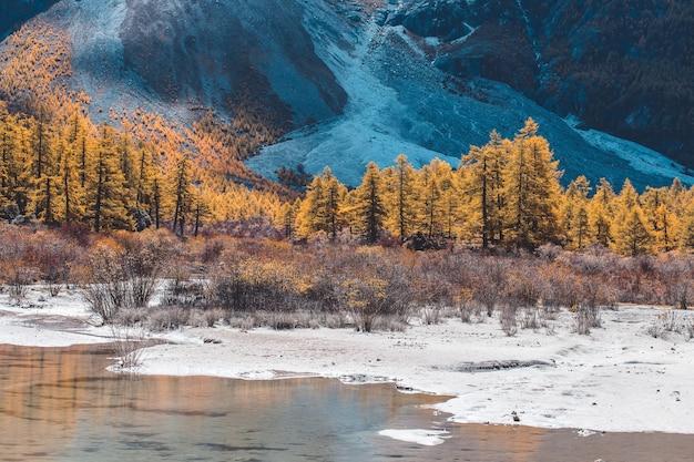 Foresta di autunno colorato e montagna di neve