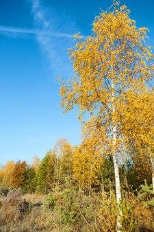 Foresta di autunno colorato su una superficie di cielo blu la mattina presto
