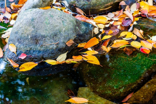 Foglia variopinta di autunno che galleggia sull'acqua libera.