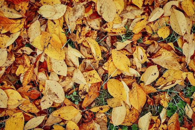 Sfondo di foglie autunnali colorate