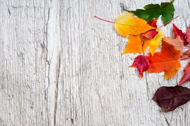Foglie di autunno colorate su assi di legno di rovere sbiancato