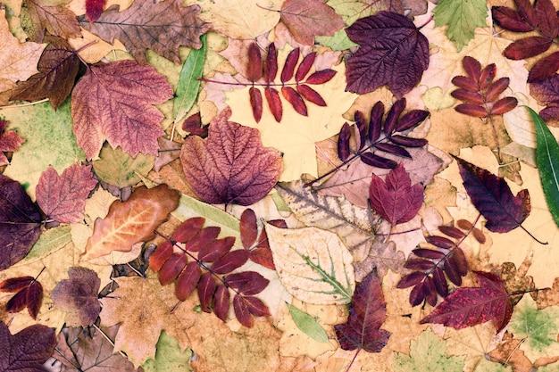 Composizione di foglie autunnali colorate. modello di foglia d'albero. stagione autunnale bellissimo sfondo della natura
