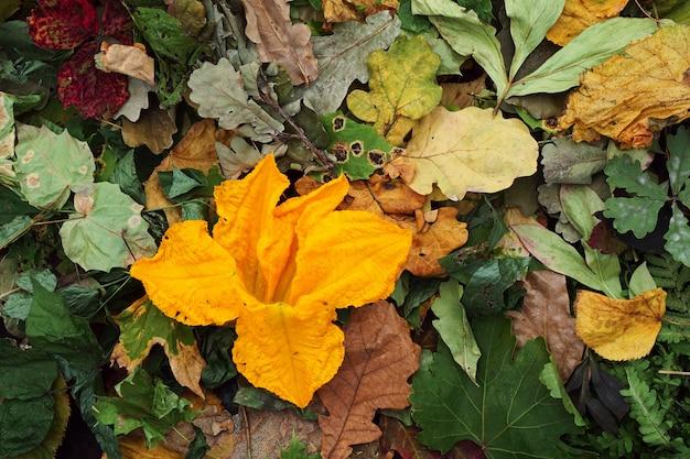 Foglie colorate di autunno e fiori di zucchine
