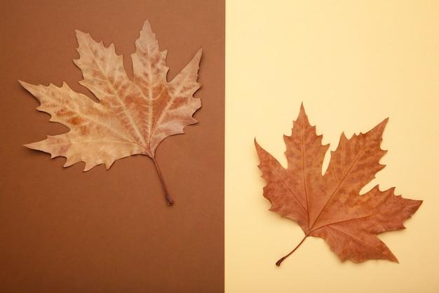 Foglie di acero di autunno variopinte sul beige