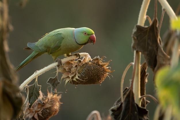 Uccello colorato su un ramo