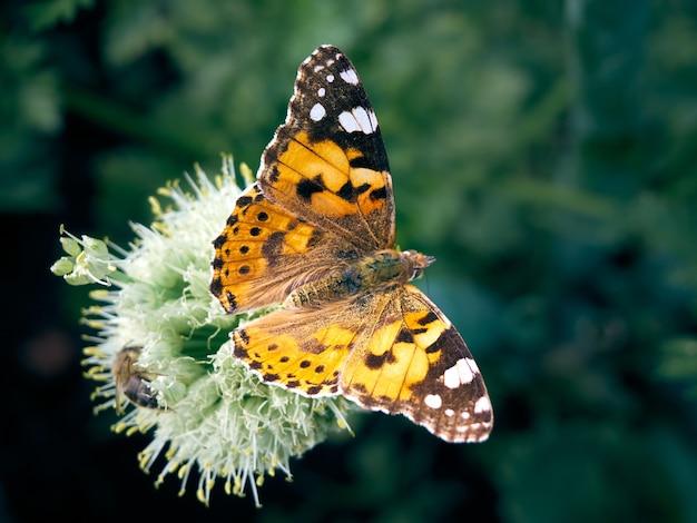 Farfalla colorata su un fiore.