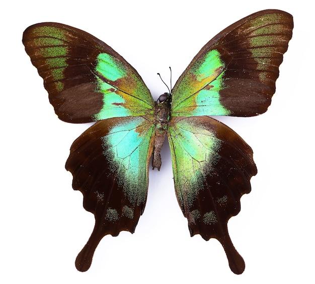 Farfalla colorata isolato su bianco