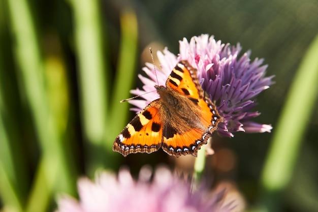 Ali di farfalla colorate. bellissimo animale farfalla, all'aperto