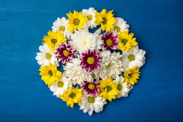 Crisantemo colorato su sfondo blu con copia spazio