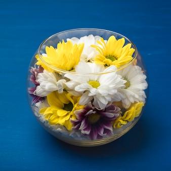 Crisantemi colorati in un vaso di vetro su sfondo blu. copia spazio