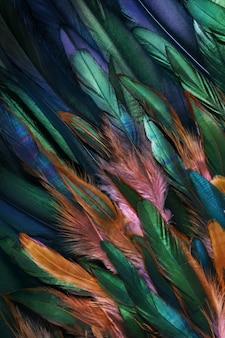 Foto ravvicinata colorata di piume di pollo.
