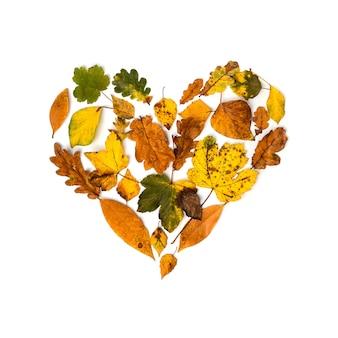 Collezione colorata di foglie d'autunno come un cuore su uno sfondo bianco