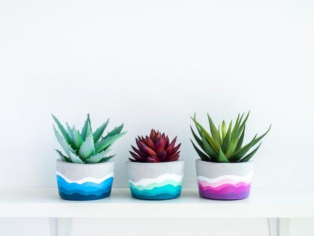 Vasi di cemento rotondi fai da te colorati con piante succulente verdi e rosse su uno scaffale di legno bianco sulla parete bianca con spazio per le copie fioriere in cemento verniciato a colori unici.