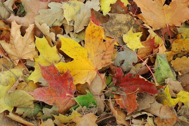 Foglie secche variopinte sul pavimento nella stagione di autunno.