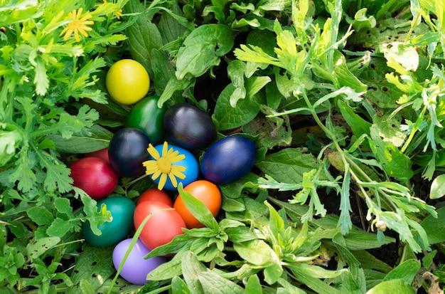 Uova di pasqua colorate su erba verde. copia spazio.