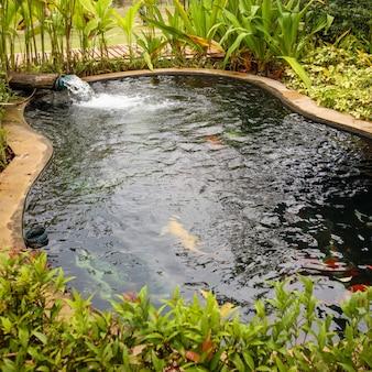 Pesci di koi di carpe fantasia colorati nel laghetto in giardino