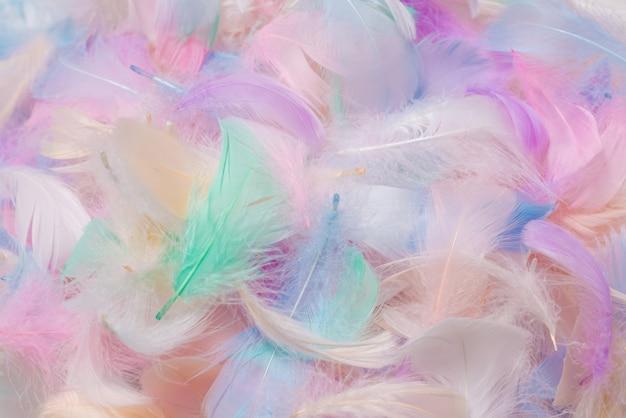 Sfondo di piume colorate, vista dall'alto
