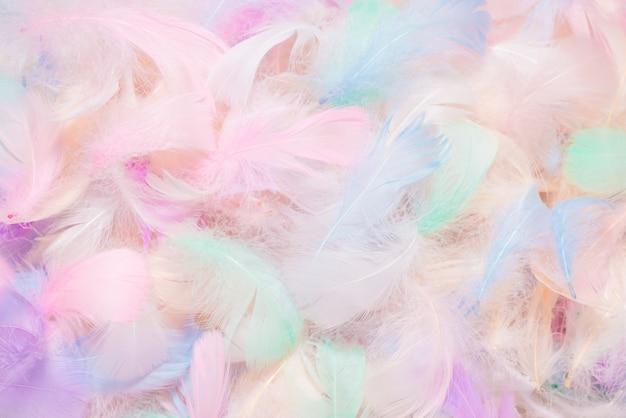 Sfondo di piume colorate