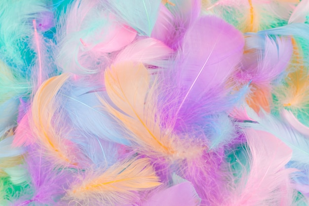 Piuma colorata su sfondo menta, vista dall'alto.