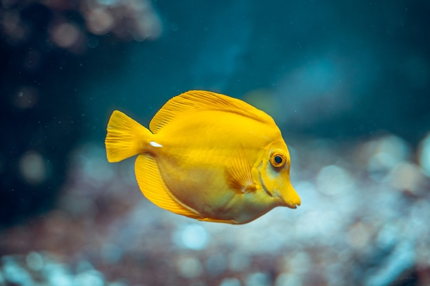 Pesci colorati nell'acquario allo zoo