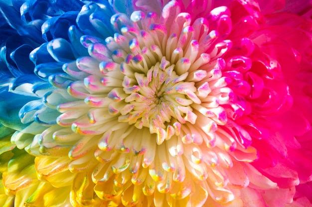 Fiore colorato