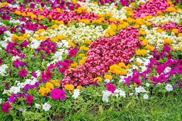 Fiori colorati in giardino. foto ritagliata. paesaggio estivo. rosa, fiori bianchi gialli ed erba verde.