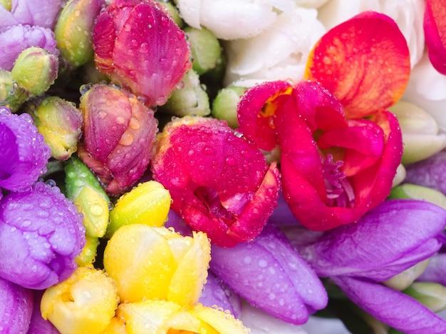 Bouquet di fresia colorato