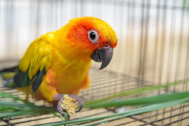 Ali colorate pappagallo conuro del sole giallo uccello pappagallo blu e verde