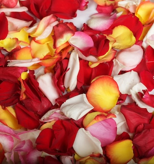 Sfondo di petali di rosa colorati