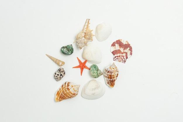 Conchiglie di mare colorate sparse in modo casuale nel mucchio su priorità bassa bianca