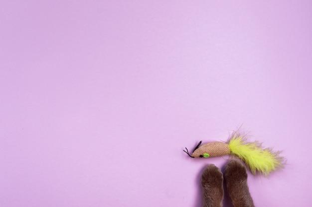 Zampe variopinte del topo e del gatto del giocattolo sulla viola. copia spazio