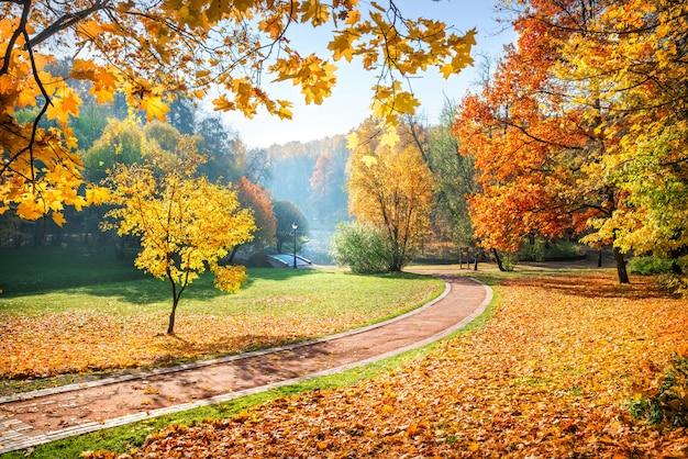 Gli alberi variopinti in autunno parcheggiano tsaritsyno a mosca