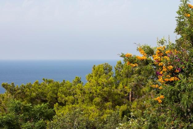 Alberi colorati e fiori sulla costa mediterranea della turchia alanya. paesaggio marino, la foschia sullo sfondo