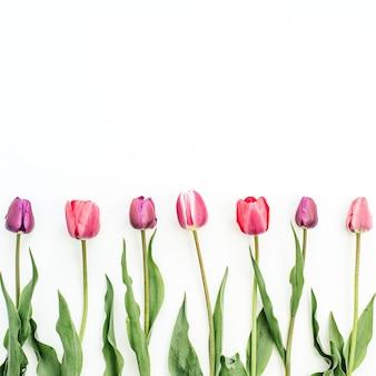 Fiori di tulipano colorati su sfondo bianco. disposizione piatta, vista dall'alto