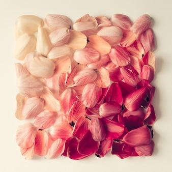 Modello di petali di tulipano colorato a forma di quadrato. lay piatto.