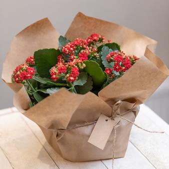 Fiori di kalanchoe colorati da brivido della vedova nel bouquet di carta