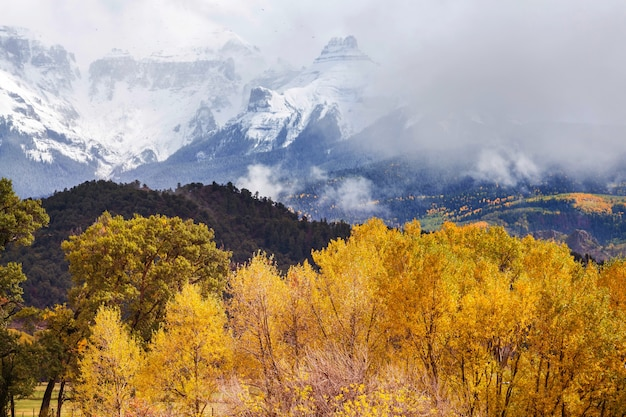 Autunno giallo colorato in colorado, stati uniti. stagione autunnale.