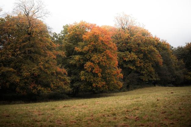 I colori dell'autunno in galles