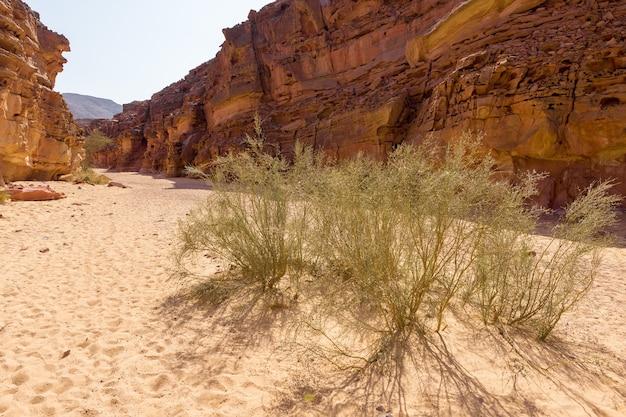 Il canyon colorato è una formazione rocciosa sulla penisola del sinai meridionale (egitto). rocce del deserto di arenaria multicolore dello sfondo.