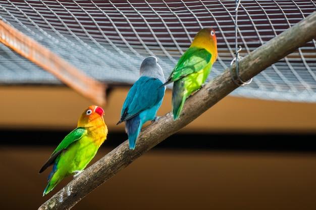 Uccello pappagallo colorato seduto sul trespolo.